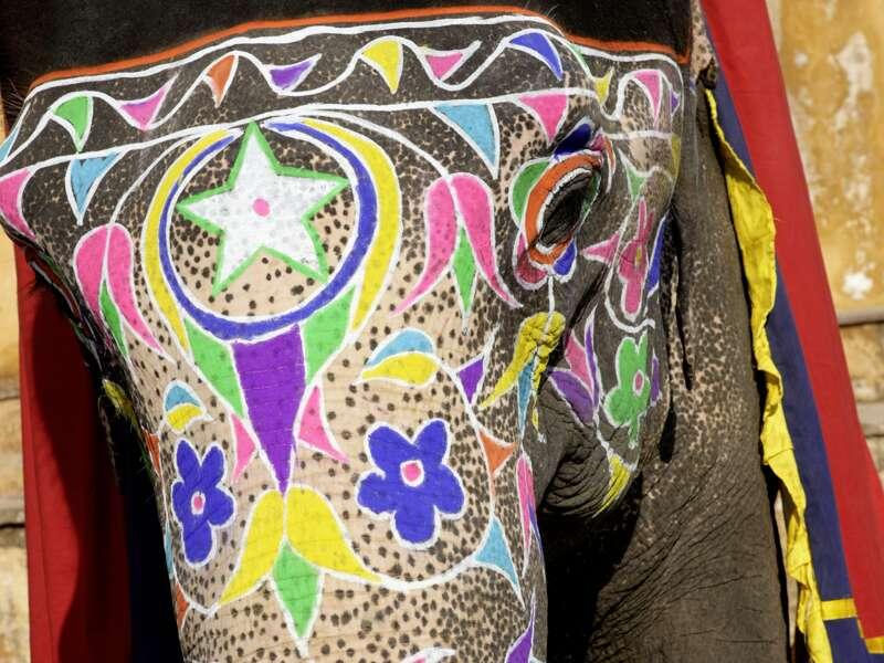 Auf unserer Rundreise durch Rajasthan sehen wir vielleicht auch bunt bemalte und festlcih geschmückte Elefanten.