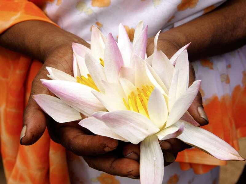 An den Tempeln von Anuradhapura bieten Gläubige Lotusblüten als Votivgaben dar. Die Klosterstadt ist eine Station Ihrer Rundreise in kleiner Gruppe durch Sri Lanka.