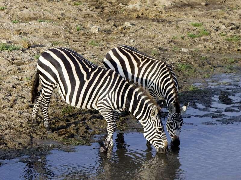 Auf unserer Rundreise durch Tansania kommen wir in Kontakt mit der afrikanischen Tierwelt.