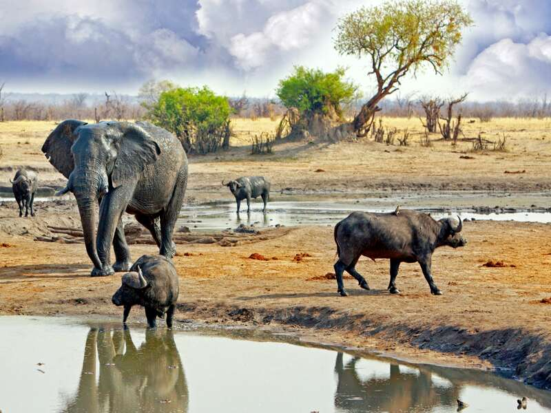 Im Krüger-Nationalpark in Südafrika spüren wir in offenen Geländewagen den Big Five nach.