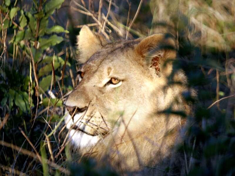 Auf unserer Rundreise durch Botswana, Namibia und Simbabwe beobachten wir die unterschiedlichsten Tiere in der Wildnis,