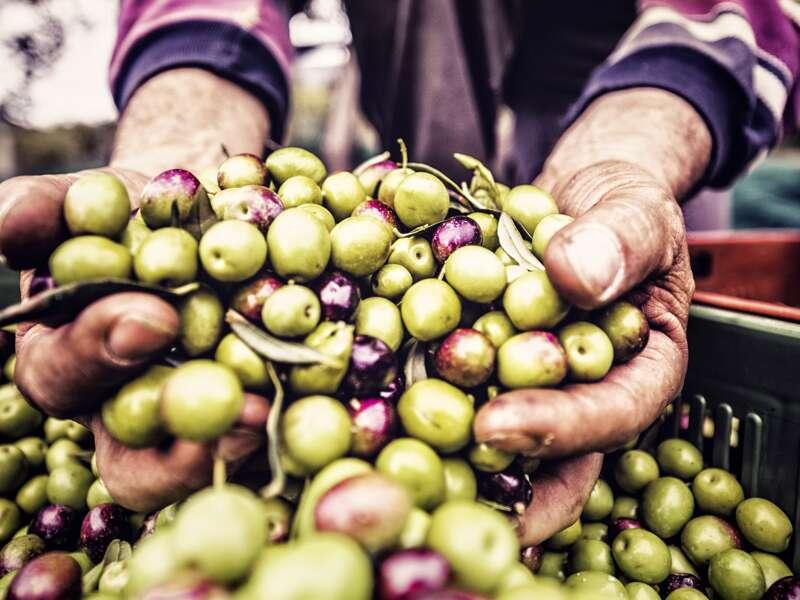 Auf unserem Trip durch Griechenland probieren wir die unterschiedlichsten Oliven - unsere ständigen Begleiter auf der Reise.