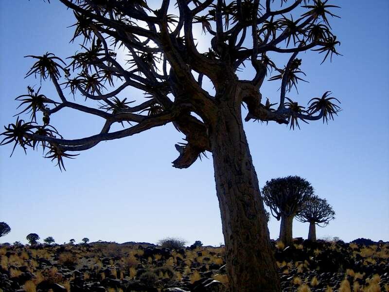 Unsere Rundreise durch Namibia verspricht ausführliche Ausflüge zu den Naturschönheiten und in die Wildnis des Landes.