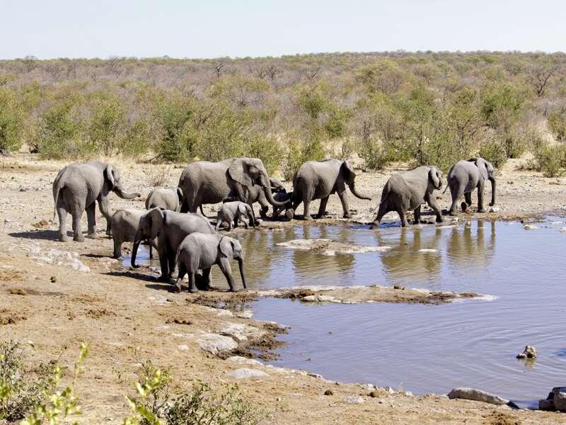 Auf Pirsch im Etoschapark begegnet uns eine Elefantenherde.