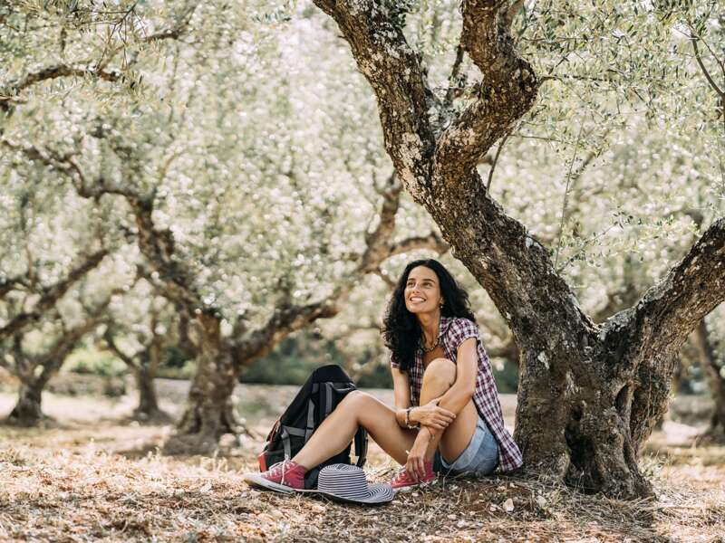 Während unserer Singlereise auf Kreta führt uns eine kurze Wanderung durch Olivenhaine.