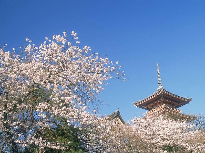 Nicht nur zur Kirschblüte eine Reise wert: Kyoto. Auch wir machen auf unserer Studienreise durch Japan Station in der alten Kaiserstadt mit ihren zahlreichen historischen Tempeln.