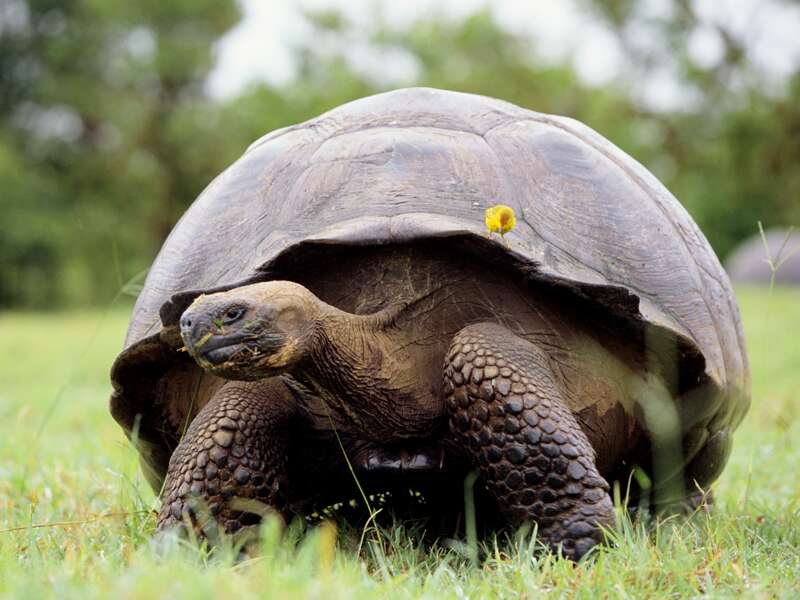 Im Rahmen unserer Studiosusreise auf die Galápagosinseln besuchen wir eine Schildkrötenaufzuchtstation.