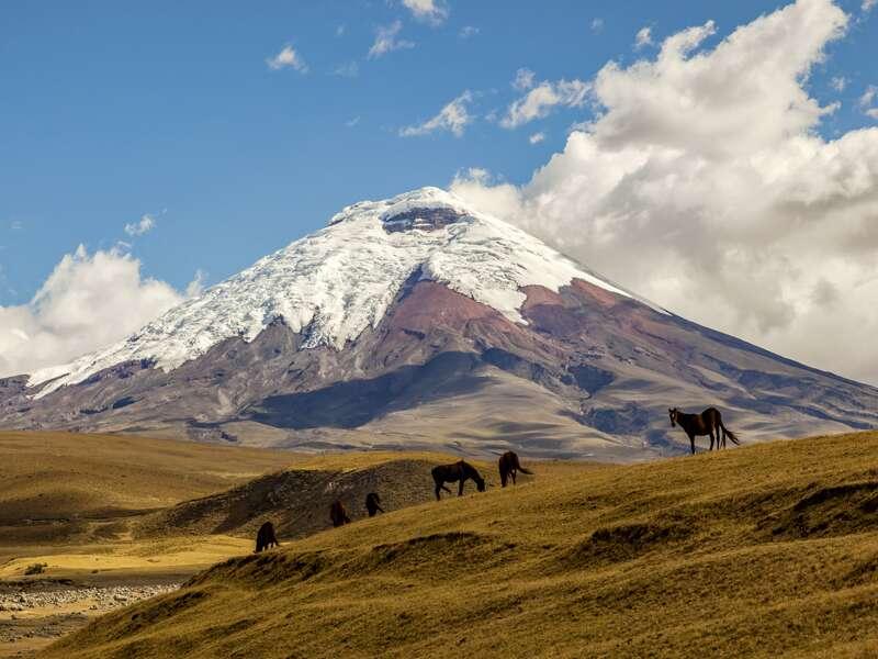 Bei unserer Natur-Studienreise durch Ecuador fahren wir durch die Allee der Vulkane am Fuße des Cotopaxi und spazieren durch den Cotopaxi-Nationalpark bis zur Lagune von Limpiopungo.
