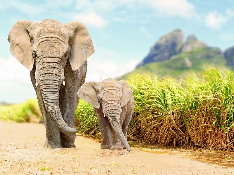Eine Elefantendame und ihr Junges kommen uns im Addo-Nationalpark entgegen, einer Station auf der Studiosus-Reise in den Kapprovinzen Südafrikas.