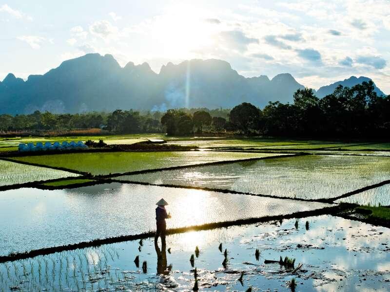 Abendstimmung über den Reisfeldern - ein typisches Bild bei einer Studienreise durch Vietnam.
