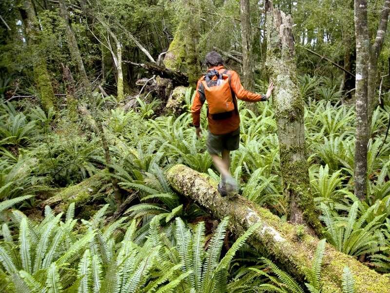 Im Fjordland-Nationalpark läuft die Natur der Südinsel zur Hochform auf. Hier haben wir auf unserer großen Neuseeland-Studienreise die Gelegenheit, ein wenig wandern zu gehen.