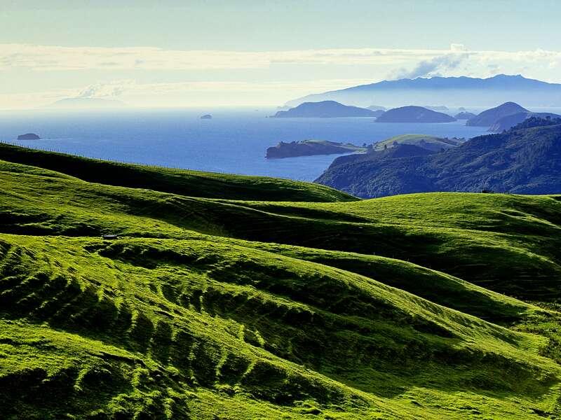 Sanft wellen sich die grünen Hügel der Coromandel-Halbinsel vor dem blauen Ozean. Coromandel auf der Nordinsel ist ein landschaftliches Highlight dieser Studienreise nach Neuseeland.