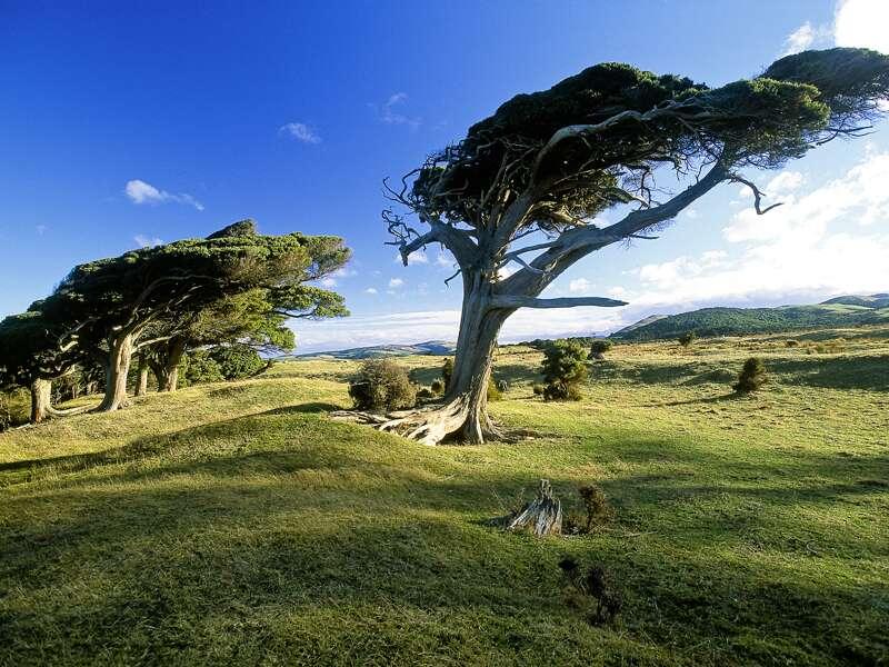 Stetiger Wind vom Meer drängt die Bäume in der Cannibal Bay auf der neuseeländischen Südinsel, ins Landesinnere zu wachsen. Auf unserer Studienreise mit Muße haben wir viel Zeit für die landschaftlichen Schönheiten Neuseelands.