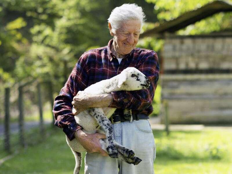 Liebevoll blickt der neuseeländische Farmer im karierten Wollhemd auf das Lamm, das er im Arm hält. Noch immer ist Schafzucht eine wichtige Einnahmequelle auf der Südinsel, die wir auf der Studienreise Neuseeland mit Muße umfassend kennenlernen. Jedes Jahr werden Tausende Merinoschafe geschoren. Die besten Pullover bekommt man hier.
