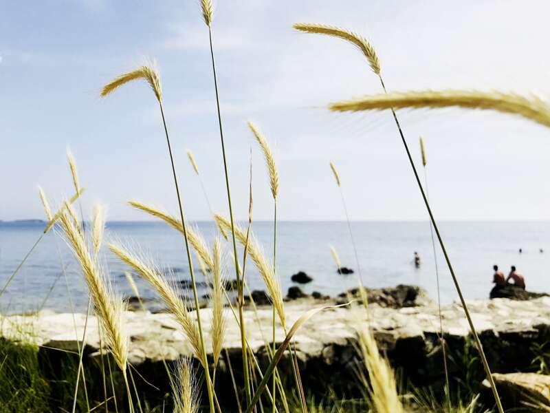 Pflanzen und Steinstrände kennzeichnen die spektakuläre Küste Kroatiens.