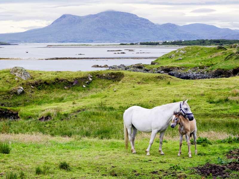 Auf unserer Studienreise in Irland wandern wir im Connemara-Nationalpark. Mit ein wenig Glück sehen wir eine Ponystute mit ihrem Fohlen für ein schönes Foto.