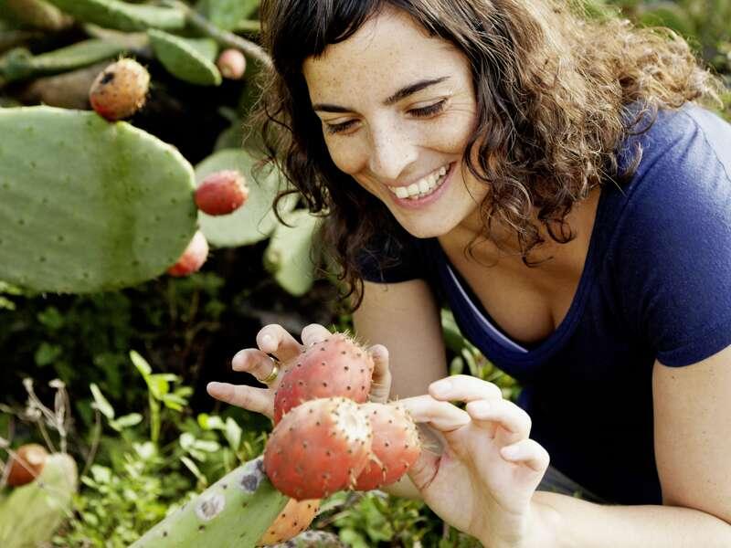 Während unseres Aufenthalts auf Lanzarote, wohin uns unsere Naturstudienreise führt, sehen wir die Früchte des Feigenkaktus.