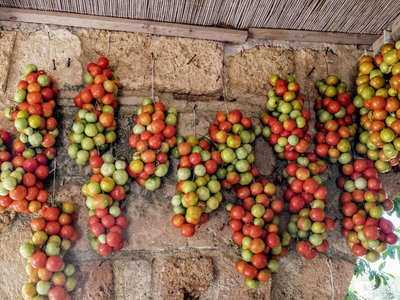 Achttägige Studienreise zu den Höhepunkten Apuliens wie den Trulli und Castel del Monte. Besuch von Bari, Ostuni, Lecce, Matera und Otranto; kein Hotelwechsel. Und die Kulinarik kommt nicht zu kurz; beileibe nicht nur die Vielfalt an Tomaten wird Sie begeistern.